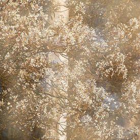 Krentenbomen vol bloesem van Karla Leeftink