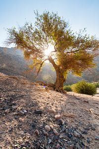 Dana National Parc - Jordanie