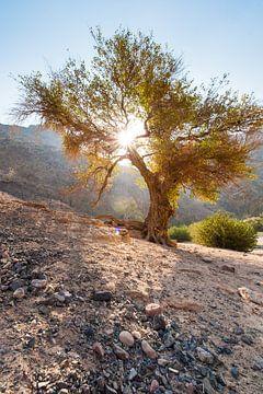 Dana Nationalpark Jordanien von