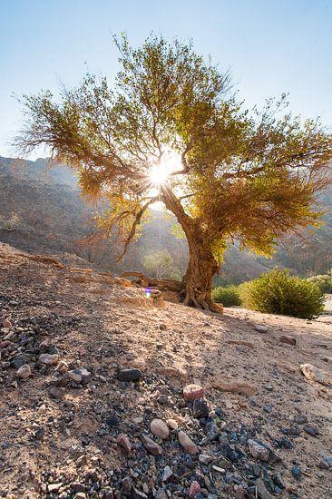 Dana National Parc - Jordanie van Laura Vink