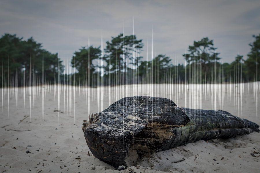 Verbrand hout van mandy sakkers