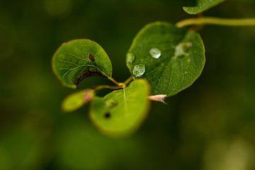 Na regen komt een drup von Stephanie Kweldam-Beugelink