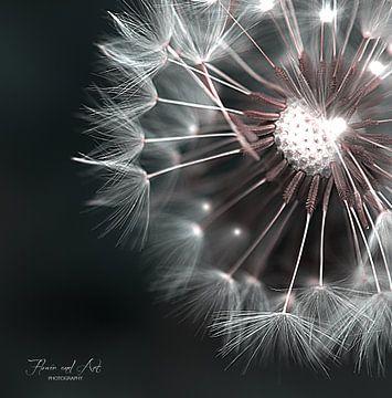 Ein Kranz aus flauschigem, weißem Löwenzahnflaum von Flower and Art