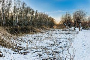 Rhoonse Grienden - Snowy day
