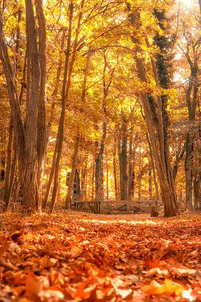 Herfst pad van Tashina van Zwam