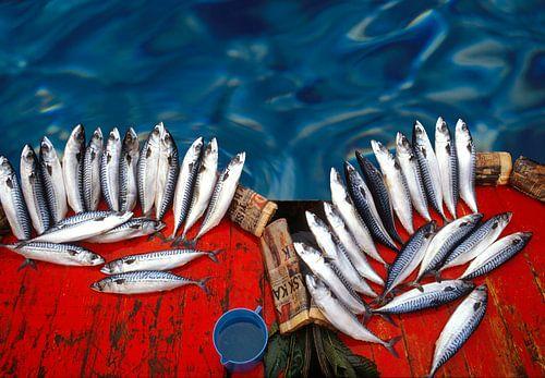 Frischer Fisch von Marcel van Balken
