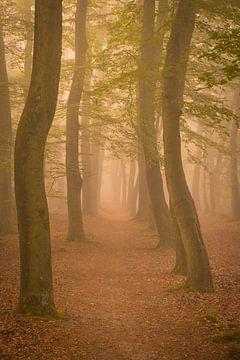 Fussweg durch einen Buchenwald an einem nebligen Herbstmorgen von Sjoerd van der Wal