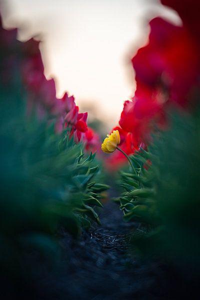 Einsame Blume von koennemans