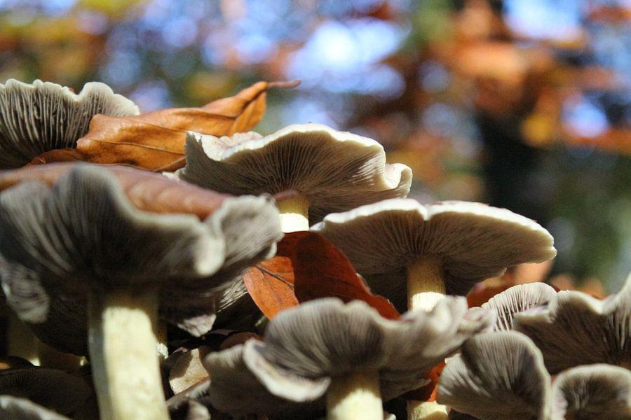 Prachtige paddenstoelen. van Mark Nieuwkoop