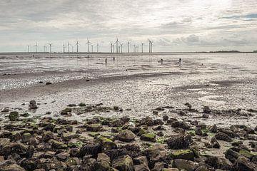 Männer graben bei Ebbe Seeköder in einer ehemaligen niederländischen Mündung von Ruud Morijn