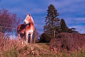 dromerig paard van