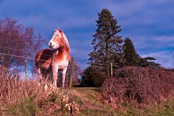 dromerig paard von Robert Stienstra