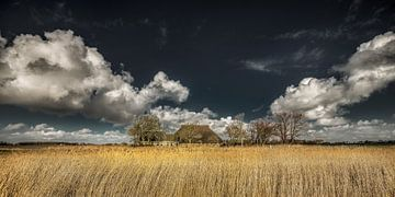 Landschap met boerderij ter hoogte van Holwerd in Friesland sur