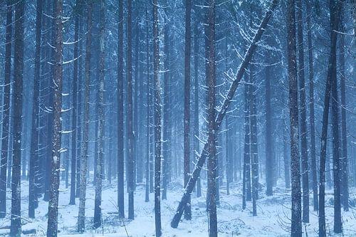 Forest frost von Olha Rohulya
