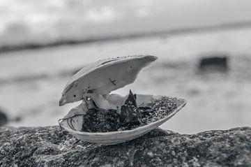 Offene Schale von Melvin Fotografie