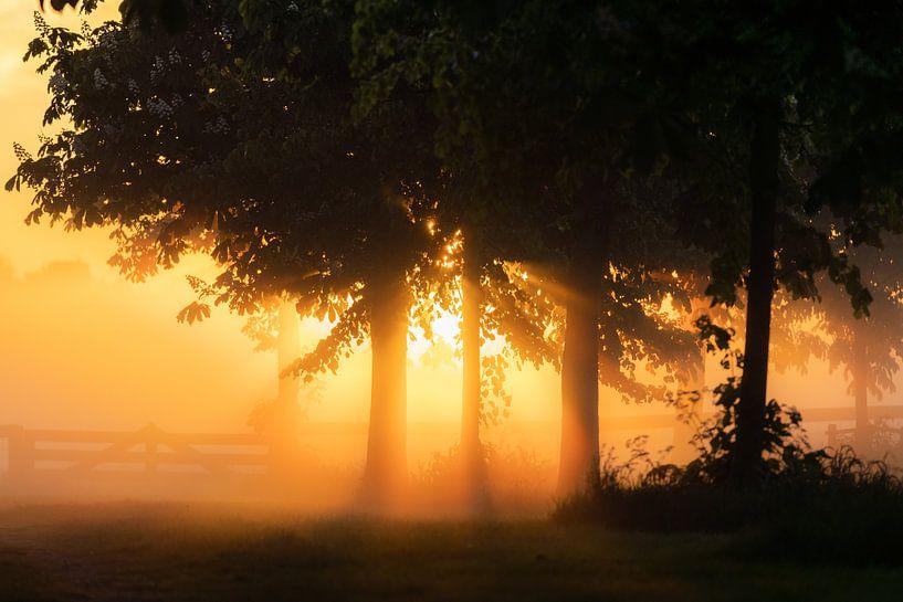 Sonnenstrahl durch Bäume von koennemans