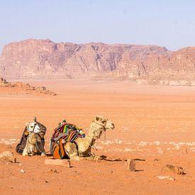 Twee kamelen in de Wadi Rum woestijn in Jordanië van Reis Genie