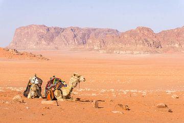 Zwei Kamele in der Wüste Wadi Rum in Jordanien von Reis Genie