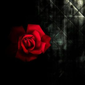 dunkelrote Rose von Ribbi The Artist