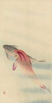 Two carp, Ohara Koson sur