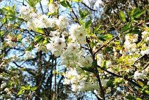 Frühlingsblüte im Wald von M de Vos
