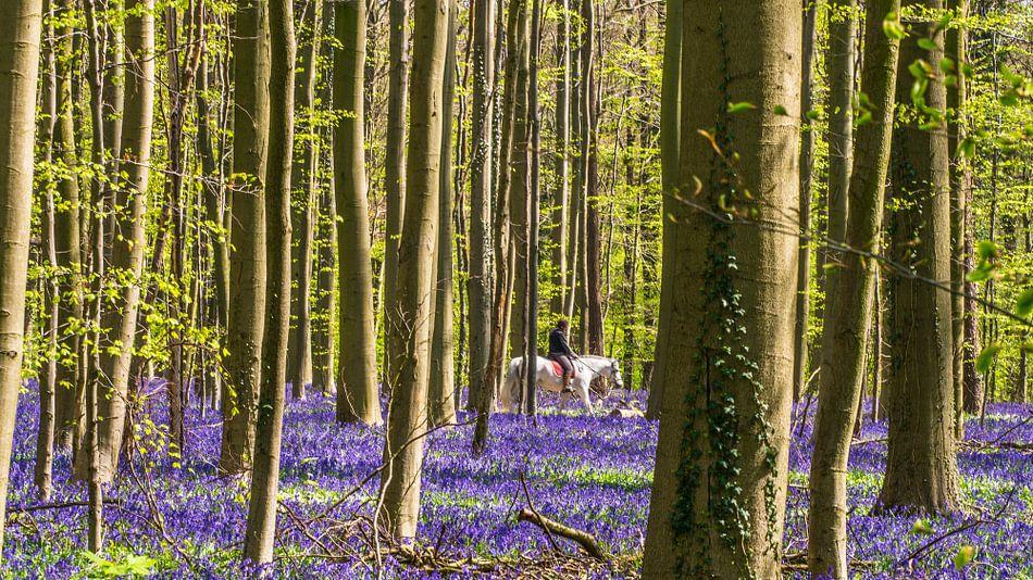 White horses in a purple field in the forest van Henk Goossens