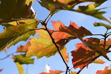 Foto van herfstbladeren waar de zon doorheen schijnt van Breezy Photography and Design