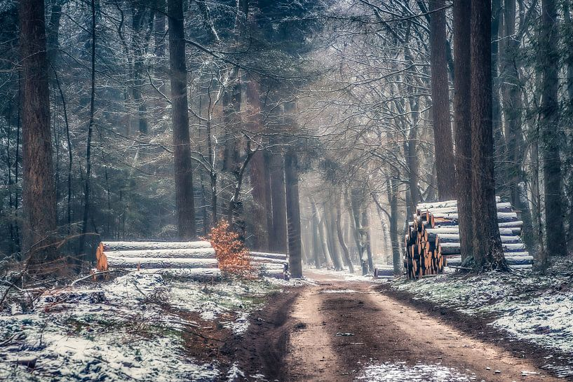 Winter in het bos van Niels Barto