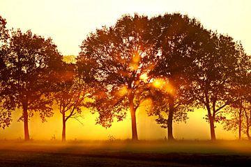 Opkomende zon achter bomen in mistig landschap van Tom Van Dyck