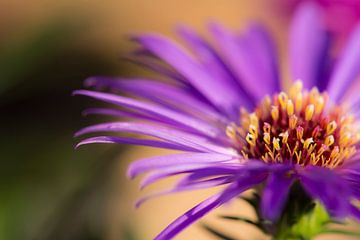 Paarse bloem macro foto van Rouzbeh Tahmassian