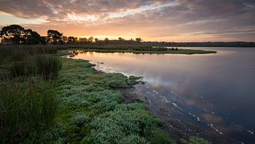 Strabrechtse Heide 243 von Desh amer