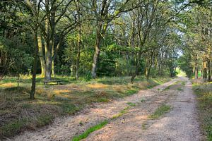 Forest Track in the Luneburg Heath