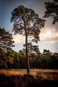 Baum von S van Wezep
