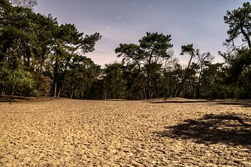 Nationaal Park De Loonse en Drunense Duinen von Anouk IJpelaar