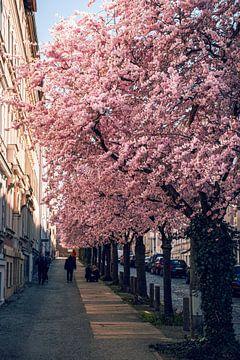 Der Frühling von D.R.Fotografie