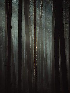 Licht in de duisternis van Jakub Wencek
