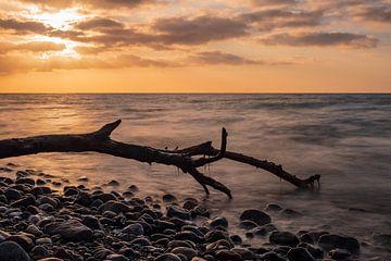 Drift wood on shore of the Baltic Sea van