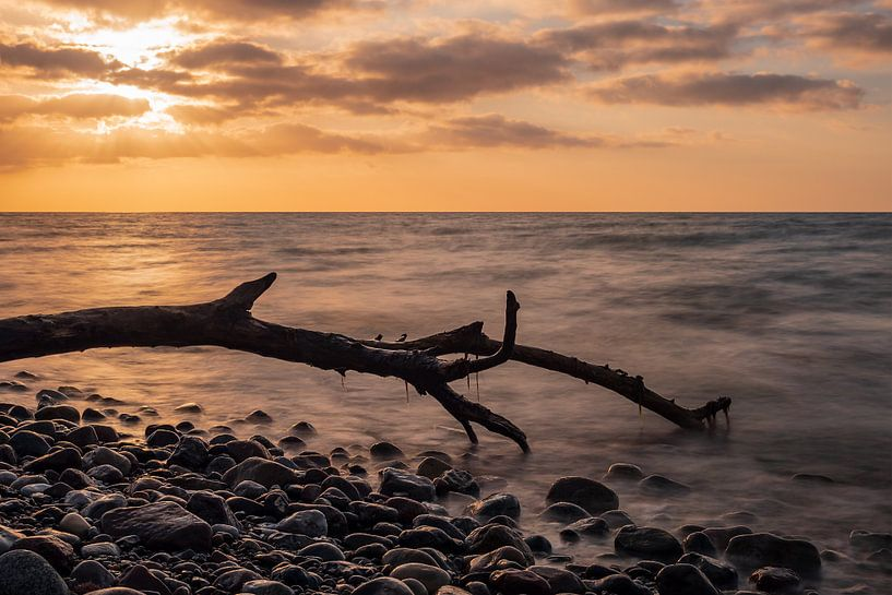 Treibholz an der Küste der Ostsee bei Warnemünde von Rico Ködder