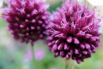 Power Flower 3 van Ewald Verholt