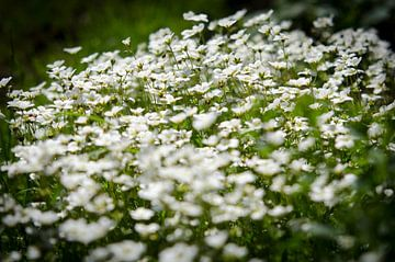 Springtime van Hans van Gurp