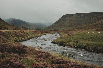 Fluss in den Cairngorms. von Paulien van der Werf