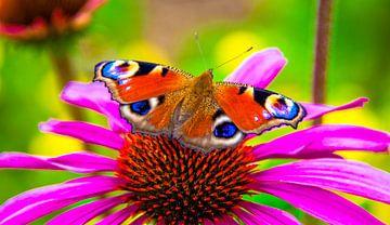 Butterfly von Alex Hiemstra