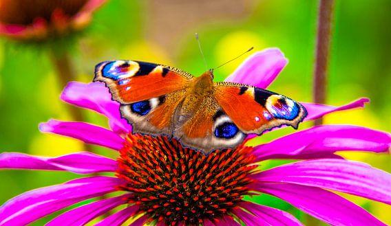 Butterfly van Alex Hiemstra