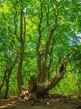Vieil arbre aux feuilles vertes