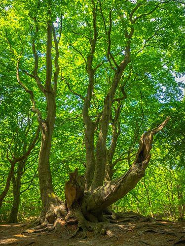 Vieil arbre aux feuilles vertes sur Martijn Tilroe