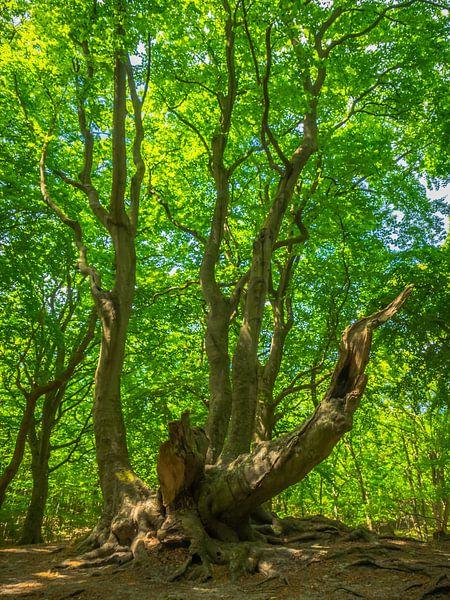Alter Baum mit grünen Blättern von Martijn Tilroe