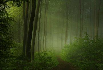 Wald Morgen, Norbert Maier von 1x
