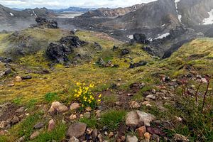 Damp, lava, bergen en groen...