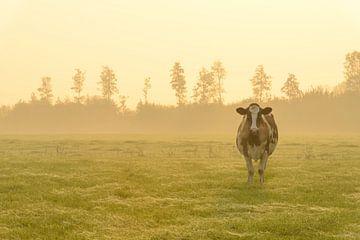 Kuh auf einer Wiese bei einem nebligen Sonnenaufgang von Sjoerd van der Wal