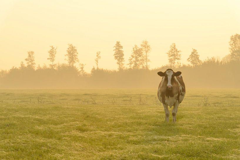 Koeien in de wei tijdens een mistige zonsopkomst van Sjoerd van der Wal